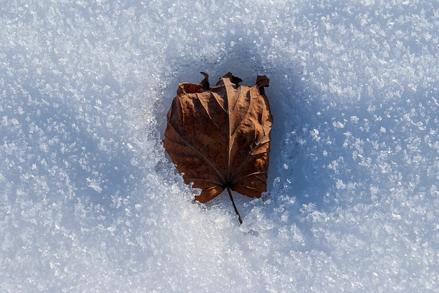 Leaf melting a hole in the snow